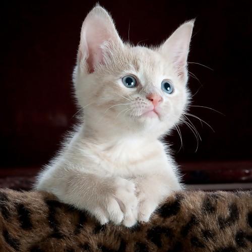 kitty-551554_1280
